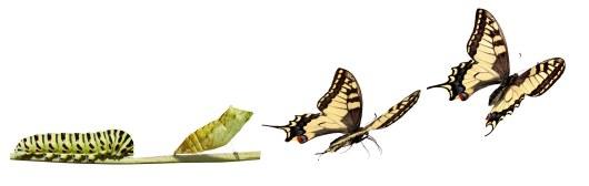 TransformationButterflies-copy